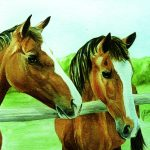 2 horse heads in watercolour