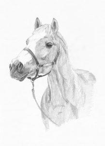 pencil horse head