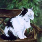 Longhair cat in pastel