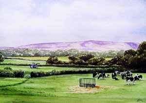 watercolour cows in landscape