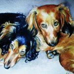 2 dachshunds in watercolour