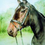 Watercolour horse head
