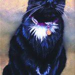 Black cat in pastel