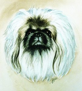 Watercolour peke