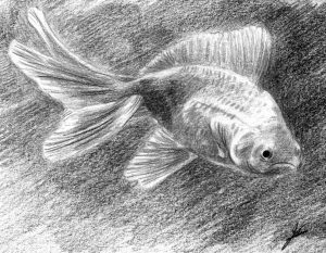 Pencil goldfish