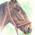 Coloured pencil horse head