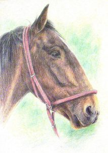 Coloured pencil horse head