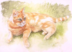 Watercolour ginger cat