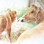 Watercolour cow and calf